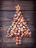 image of hazelnut tree  - Hazelnuts - JPG