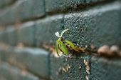 foto of grout  - small little plant growing on the grout between bricks