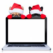 picture of christmas dog  - christmas couple of two dogs with santa claus costume behind a laptop computer pc isolated on white background - JPG