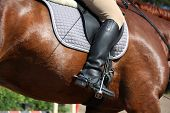 pic of girth  - Close up of rider legs with spurs on chestnut horse - JPG