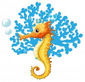stock photo of seahorse  - A seahorse underwater on a white background - JPG