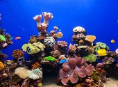 foto of saltwater fish  - Photo of a tropical fish on a coral reef in an aquarium - JPG