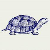 stock photo of tortoise  - Tortoise - JPG