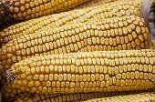 foto of maize  - Corn fruit - JPG
