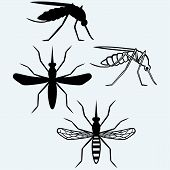 stock photo of gnats  - Silhouettes of mosquito - JPG