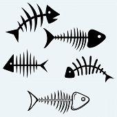 pic of skeleton  - Fish skeleton - JPG