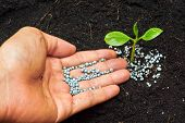 picture of fertilizer  - a hand giving fertilizer to a young plant  - JPG