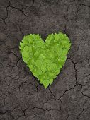 stock photo of greenpeace  - Green plant heart on cracked soil - JPG
