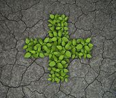 Green leaves cross on cracked soil