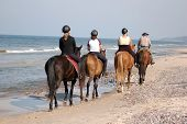 picture of horse riding  - Beach horse - JPG