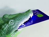foto of loan-shark  - loan shark or alligater   - JPG