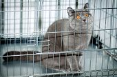 A frightened cat with orange eyes staring out from a cage poster