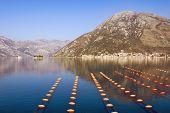 Beautiful Mediterranean Landscape. Longline Culture ( Rope Culture ) Mussel Farm.  Montenegro, Adria poster
