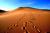 picture of mongol  - Sands dunes with footprint on gobi desert in Mongolia