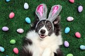 Happy dog with bunny ears surrounded by Easter eggs poster