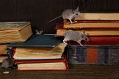 Close-up Four Young Mice On  The Old Books On The Flooring In The Library. Concept Of Rodent Control poster