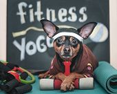Dog Fitness , Sport  And Lifestyle Concept.  Sporty And Healthy Lifestyle For Pet.  Funny Dog in S poster