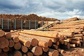 image of freightliner  - Lumber yard with stacks of wooden longs and rail cars full of wood - JPG