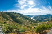 Vineyars no vale do Douro