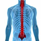 stock photo of lumbar spine  - human body under X - JPG