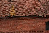 picture of tile cladding  - the destroyed tile roof with a small birch - JPG