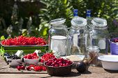 Ingredients For Making Fruit Liqueur