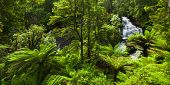picture of triplets  - Beautiful Rainforest with Waterfall - JPG