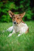 foto of stray dog  - stray dog - JPG