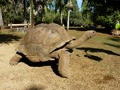 picture of mauritius  - Giant Turtles In Vanille Des Mascareignes Park, South Of Mauritius Island