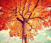 picture of tree leaves  - feet resting on a tree trunk during fall when the leaves are turning colors toned with a retro vintage instagram filter - JPG