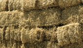 stock photo of hay fever  - Stacked Straw Hay Bails in the field - JPG