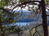 image of caribou  - View of lake in the Boundary Waters Canoe Area from Caribou Rock - JPG