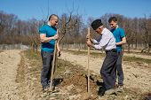 stock photo of orchard  - Senior farmer teaching his grandson and his son in law how to plant a tree in an orchard three generations family working together - JPG