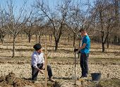 image of orchard  - Senior farmer teaching his grandson how to plant a tree in an orchard - JPG