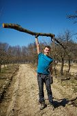 foto of orchard  - Powerful teenager raising a cut tree trunk with one arm in an orchard on springtime - JPG