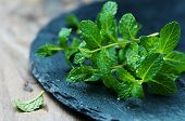 picture of mint-green  - Fresh green mint on the wooden table selective focus - JPG