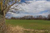picture of bavaria  - Spring landscape next to Schwandorf in Bavaria - JPG