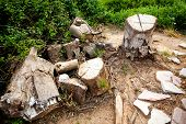 stock photo of lumber  - Old lumber collection place with remaining stumps - JPG