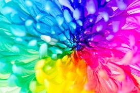 foto of transpiration  - Colorful of rainbow Chrysanthemum flower background texture - JPG