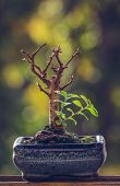 Dry Bonsai Tree With Fresh Green Sprigs poster