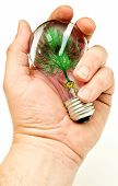 Hand Holding Light Bulb With Artificial Tree