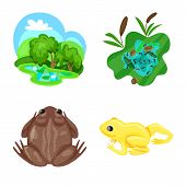 Isolated Object Of Frog And Anuran Icon. Set Of Frog And Animal Vector Icon For Stock. poster