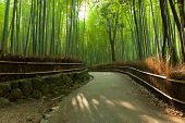Famous bamboo grove at Arashiyama, Kyoto - Japan