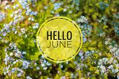 Banner Hello June. Text On The Photo. Text Hello June. New Month. New Season. Summer Month. Text On  poster