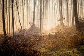 Fog In A Mysterious Dense Forest In The Morning During The Sunrise poster