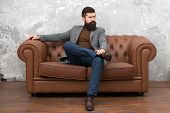 Elegant And Confident. Man Of Fashion. Fashion Model Relaxing On Sofa. Bearded Man Enjoying Casual F poster