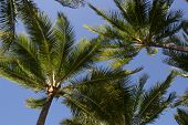 Palm Leafs In The Sky poster