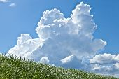 pic of thunderhead  - This is a picture of grass and thunderhead I have taken in August - JPG