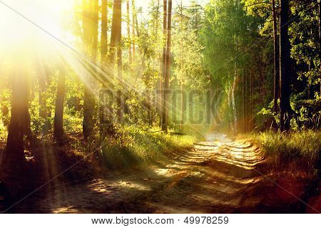 Magical Autumn Forest. Park. Beautiful Scene Misty Old Forest with Sun Rays, Shadows and Fog poster
