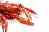 image of craw  - Fresh boiled crawfish on white isolated background - JPG